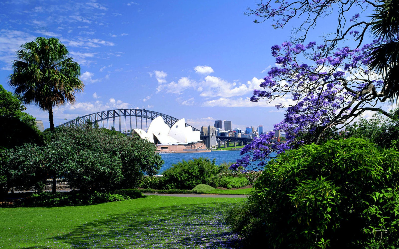 A picture of the Royal Botanic Gardens Sydney