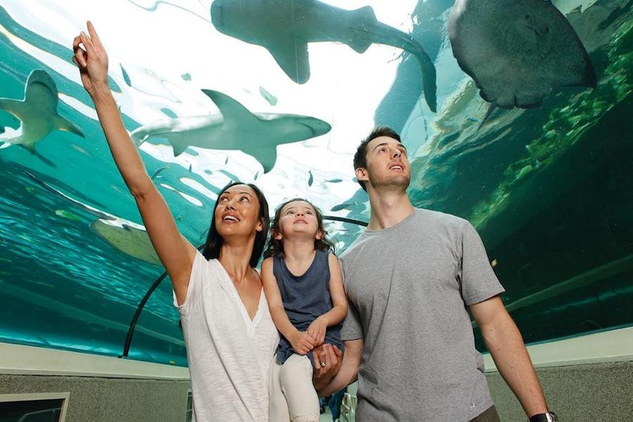 A picture of Sea Life Sydney Aquarium near Surry Hills