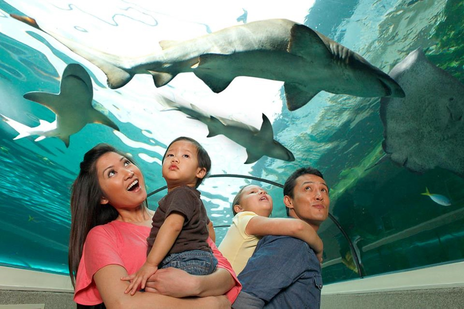 A picture of a family in Sea Life Sydney located near Riley Street Sydney